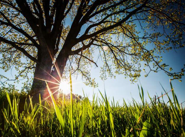 Vrhunac toplotnog vala: Pred nama je najtopliji dan u godini