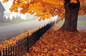 jesen hladna
