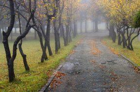 jesen drvece