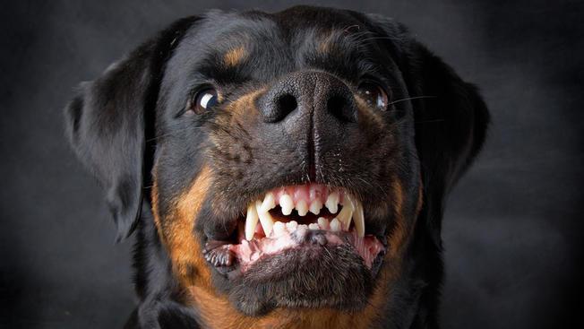 """U Ukrajini zaplijenjeni psi """"plaćaju"""" dugove vlasnika"""