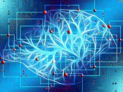 mozak_nervi_nauka_istraživanje_pixabay