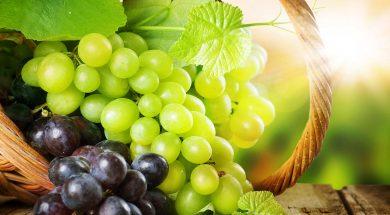 grozdje_530485fa2229a
