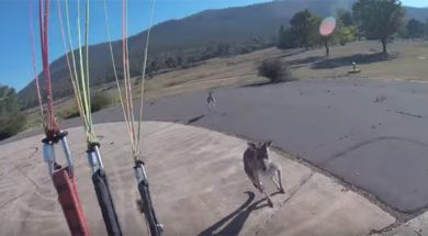 Spustio se padobranom, pa snimio napad bijesnog kengura