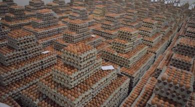 Screenshot_2019-04-02 U bh općini Donji Žabari proizvede se najviše jaja po glavi stanovnika u Evropi (FOTO)