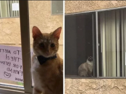 Screenshot_2019-04-30 Mačke se zavoljele gledajući se kroz prozor