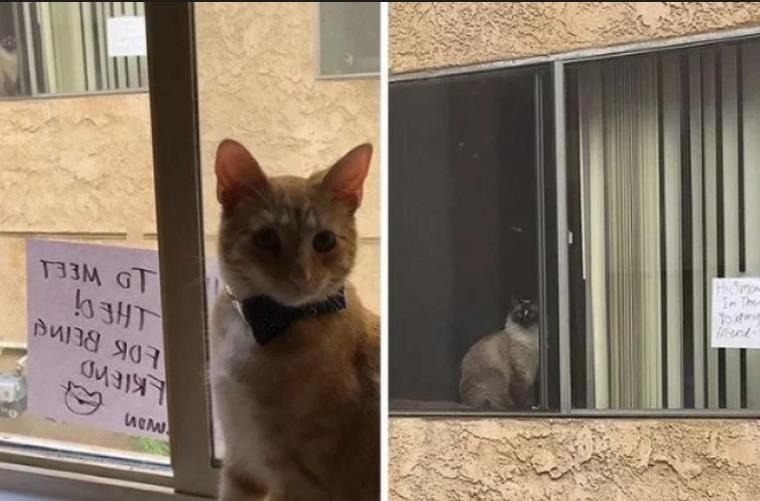"""Mačke se """"zavoljele"""" gledajući se kroz prozor"""