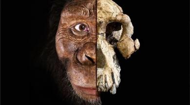 Screenshot_2019-08-31 Naučnici u Etiopiji pronašli novu lobanju drevnog ljudskog pretka