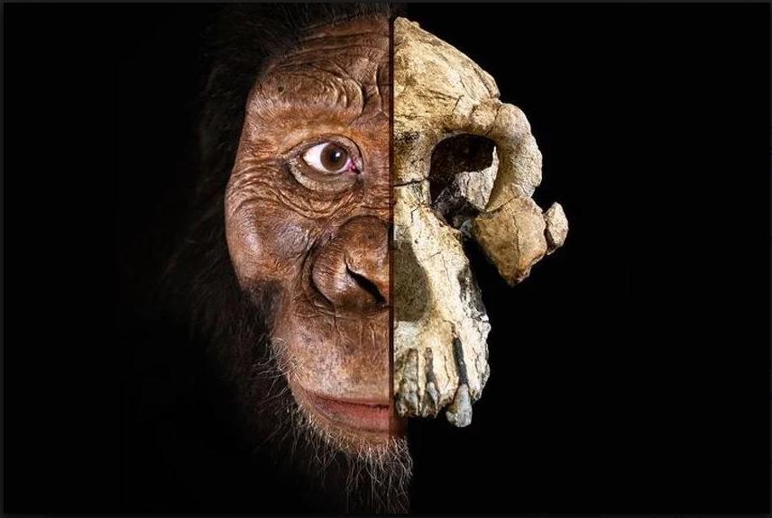 Naučnici u Etiopiji pronašli novu lobanju drevnog ljudskog pretka