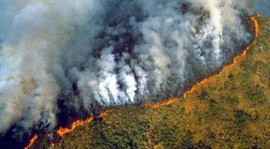 amazon požar