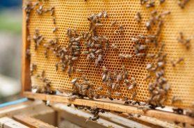 pčele košnica
