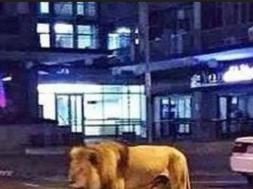 Screenshot_2019-09-23 Saudijska Arabija Muškarac uhapšen nakon što je viđen kako glavnim putem šeta s lavom