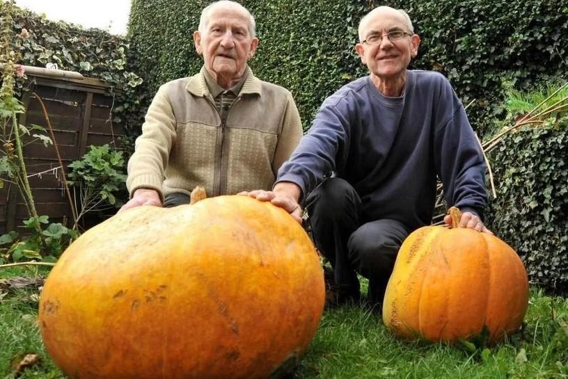 Britanac uspio uzgojiti bundevu tešku čak 84 kilograma