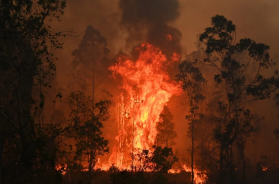 Screenshot_2019-11-10 Požari u Australiji gutaju šumu i kuće, tri osobe poginule