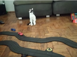 Screenshot_2020-01-14 (1) Slot Car Drives Cat Silly ViralHog – YouTube