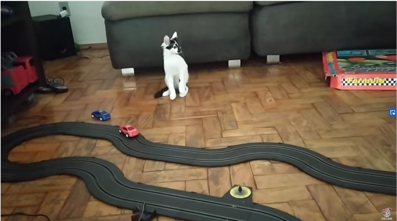 Mačka oduševljena trkaćim automobilima: Pogledajte njenu reakciju