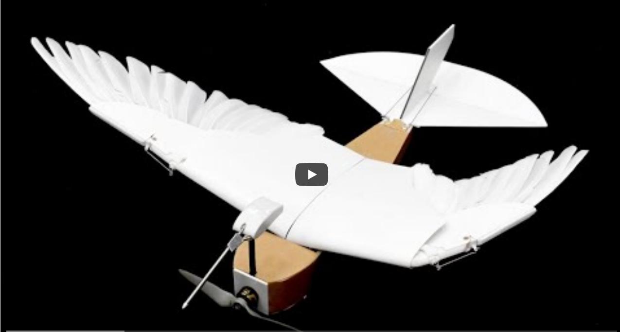 Istraživači u SAD-u izumili robotsku pticu sa pravim perjem na krilima