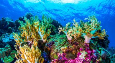 Screenshot_2020-03-08 Uznemirujuća studija Sprema se novo masovno izumiranje korala