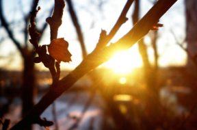 sunce_proljece