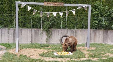 Medvjedica Aida u Pionirskoj dolini danas slavi prvi rođendan