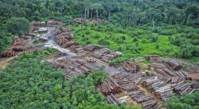 Amazon_prasuma_ilegalna_sjeca_Flickr