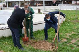 Akcija sadnje drveća u svim glavnim gradovima zemalja zapadnog Balkana