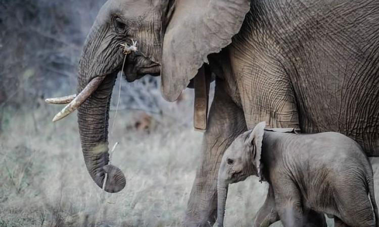 Dizalicom iz bunara izvukli slona