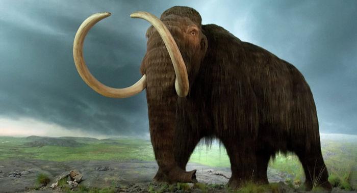 Najstarija DNK na svijetu sekvencirana iz mamuta koji je živio prije više od milion godina