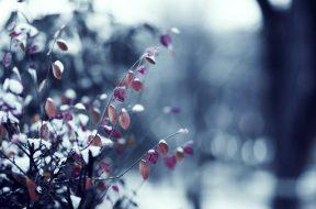 snijeg lisce