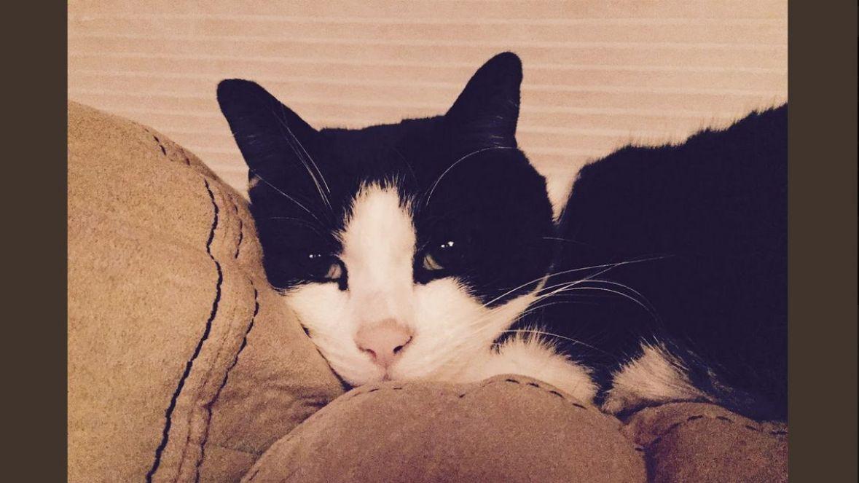 Zbog čega su vaše mačke ovisne o malim prostorima i kutijama