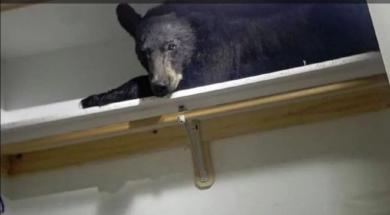 crni medvjed