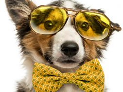 pet ljubimac pas dog