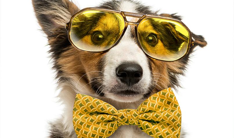 Britansko istraživanje pokazalo da psi koji su razmaženi češće pate od alergija