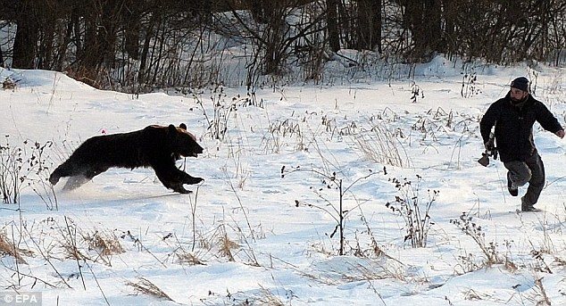 Medvjed ganjao muškarca ulicama sibirskog grada