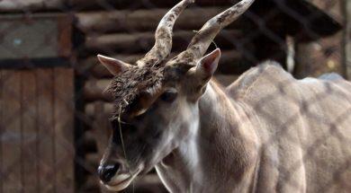 Pionirska dolina i zoo vrt od danas počinje sa ljetnim režimom rada